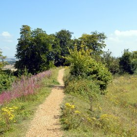 footpath in hampshire